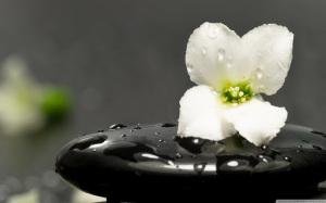 zen_stones_and_flower-wallpaper (1)